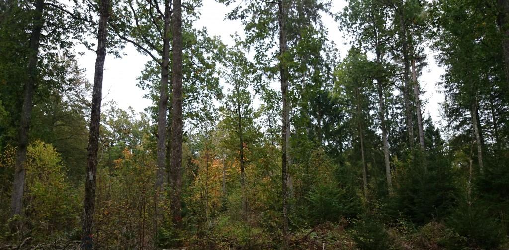 Blandskogen
