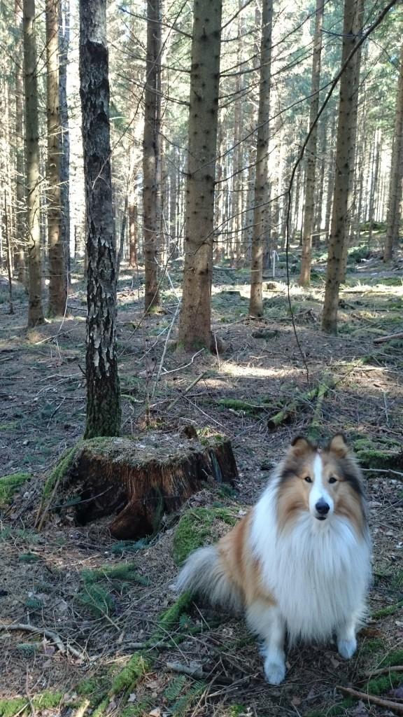 hund och stubbe