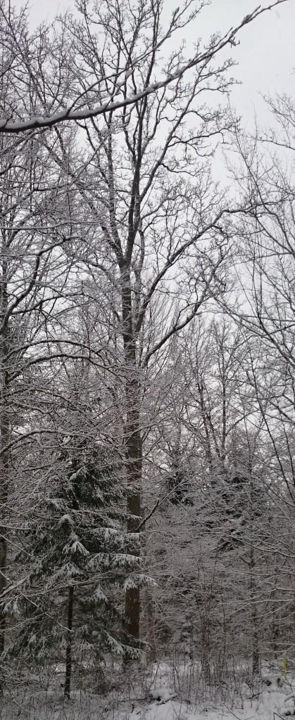 Blandskog snow
