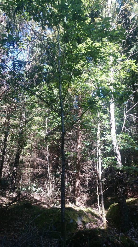 Fynd i hasselskogen
